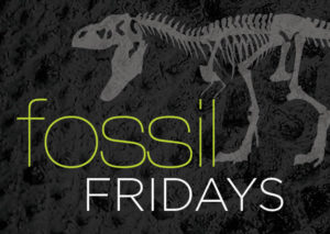 Fossil Fridays @ The Durham Museum